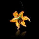 diane-venet-NESBITT-Lily